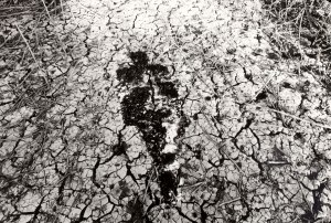 Silueta Series, Ana Mendieta, 1978