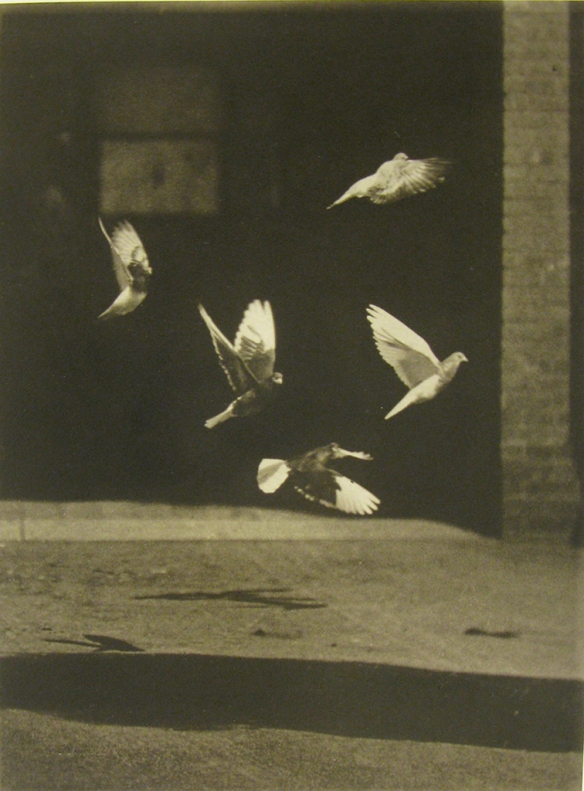 "Francis Blake (United States, 1850-1913). Pigeons on flight, 1889. Plate negative 6x8"". Credit Line: Current Owner: Massachusetts Historical Society. Object number: #57.1424-1437#6.3.401S-406S."
